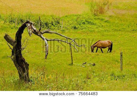 horse in farmland