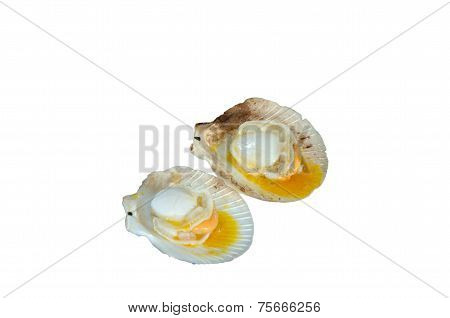 Scallops With Butter