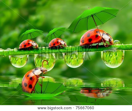 Rainy day in nature. Little ladybugs with umbrella over pond.