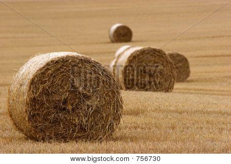 Hay Bails In Field (3)