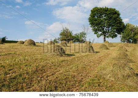 Hay Bales During The Autumn Season