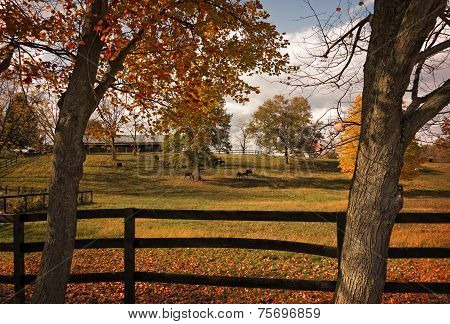 Horse Farm In Autumn
