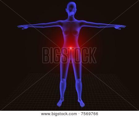 Radiografia New Cuerpo