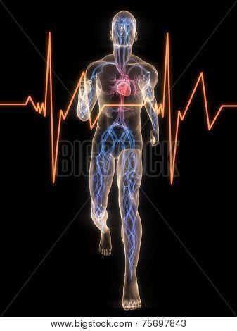 jogger - vascular system