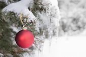 foto of icicle  - Red Christmas ornament hanging on snow covered spruce tree outside - JPG