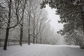 picture of slippery-roads  - Trees and fence along slippery winter road covered in thick snow - JPG