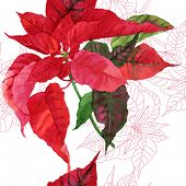 image of poinsettia  - Seamless pattern  with poinsettia plant - JPG