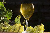 foto of sparkling wine  - Sparkling wine in the late afternoon sun - JPG