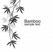 pic of bamboo leaves  - Black bamboo branches on a white background - JPG
