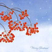 picture of rowan berry  - Winter background with branches rowan berry on watercolor backdrop - JPG