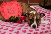pic of mutts  - A cute dog with a Valentine - JPG