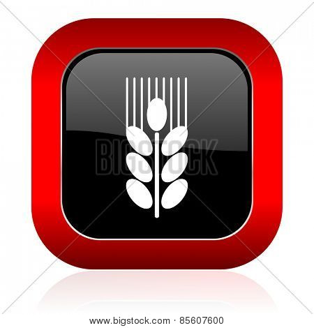 grain icon agriculture sign