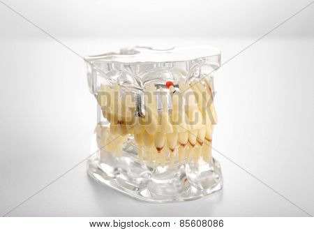Plastic human teeth models isolated on white