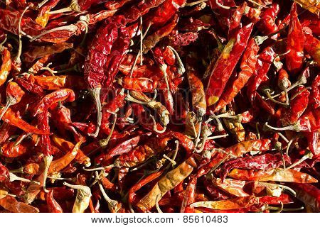 red chillies kept under direct sunlight for drying