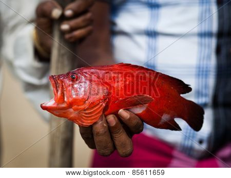 Fisherman showing red fish