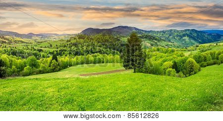 Coniferous Tree In A Panoramic Valley At Sunrise