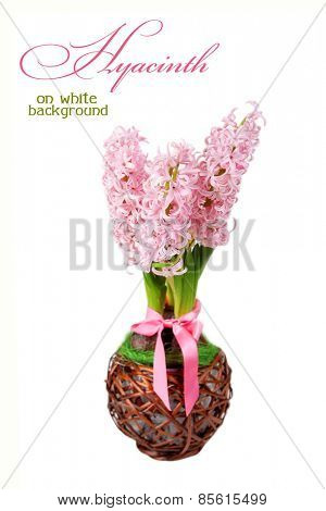 Hyacinth on a white background