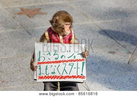 Monkey Show at Kitano District in Kobe Japan