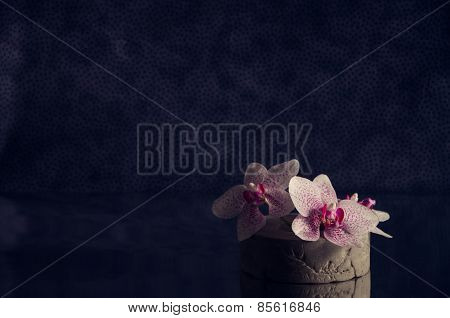 White and pink speckled Phalaenopsis orchid flowers in a concrete vase