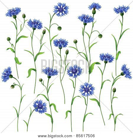 Blue Cornflowers Set