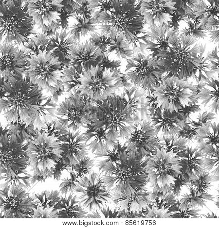 Gray seamless pattern of cornflowers