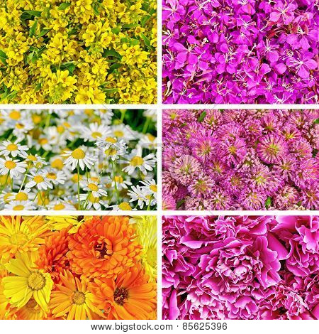 Set of textures different flowers