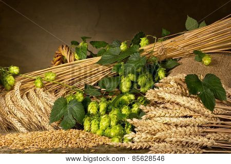 Hop Cones Barley And Wheat