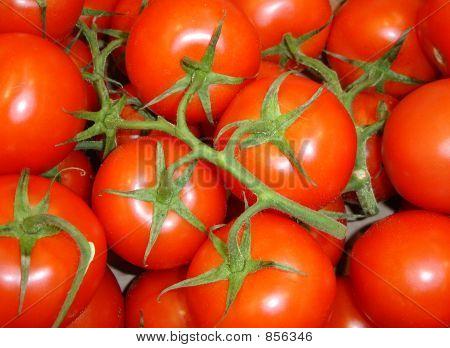 Red Tomatos