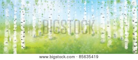Vector Birch Forest,  Spring Bokeh Background.
