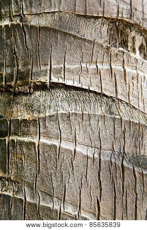 Bark In Kho Tao   Bay    Tree    Thailand