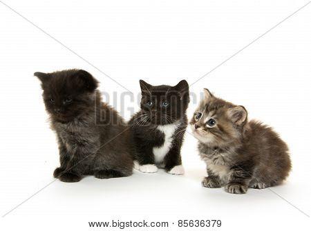 Three Cute Kittens On White