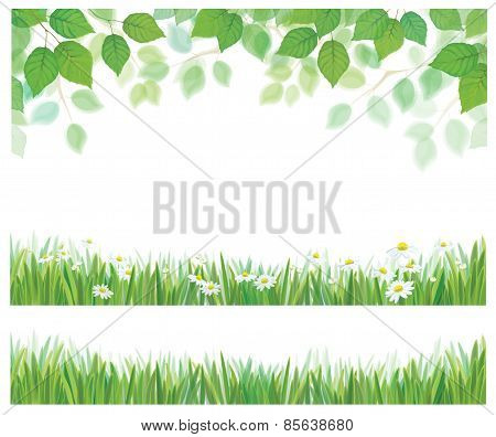 Vector spring birch tree leaves grass and daisy flowers borders isolated.