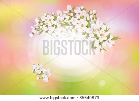 Vector frame blossoming cherry tree spring background.