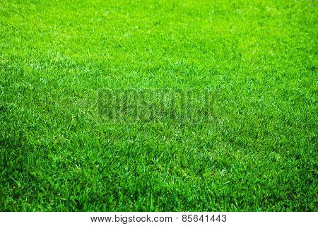 Young grass or lawn, shallow depth of field.