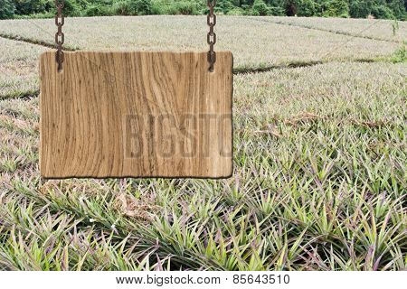 Blank wooden sign on field of pineapple farm. Concept of rural, idyllic, tranquility etc.