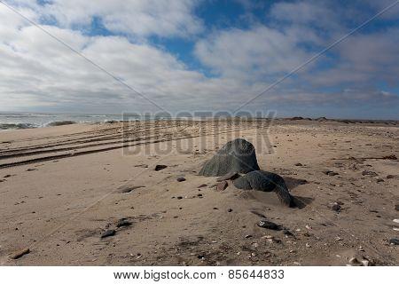 Skeleton Coast Panorama