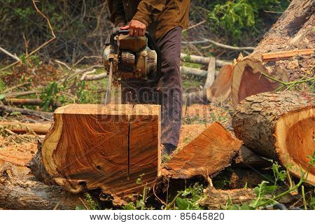 Chainsaw cutting the wood