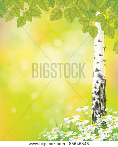 Vector chamomiles and birch tree background.