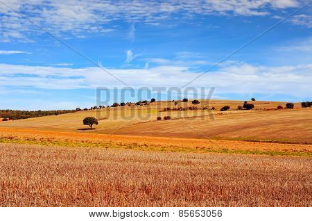 view of a cornfield landscape in the province of Soria, in Spain