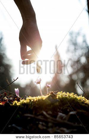 Man In A Spring Garden
