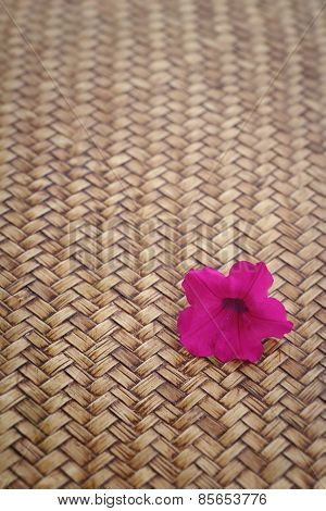 Pink Petunias Flowers On Wood Background