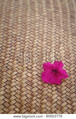 Pink Petunias Flowers On Wood Background