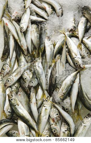 Mackerel/fish