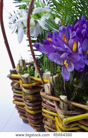 Basket Of Snowdrops And Crocuses