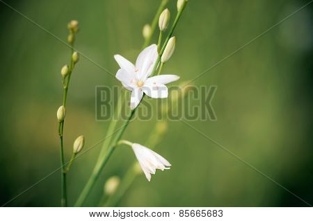 Beatiful Wild Flower On Green Meadow