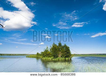 Forest Around Green Island