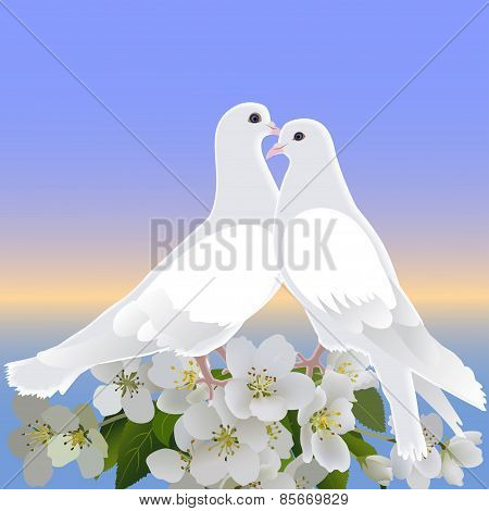 Two White Doves And Branch Of Blossoming Apple Tree
