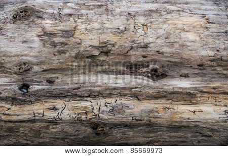 Driftwood Closeup Background 1