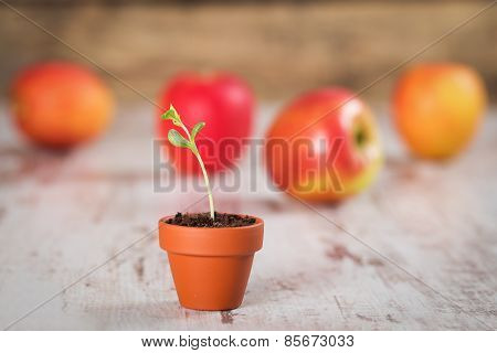 Young Apple Sprout On A Wood