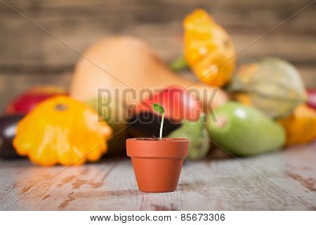 Young Vegetable Sprout On A Wood